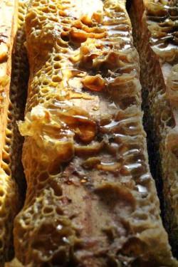 Cadres remplis de miel sous la cire