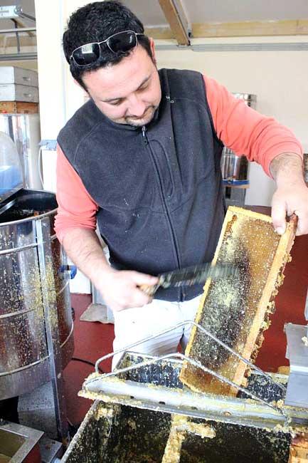 Désoperculation des cadres par Samuel apiculteur