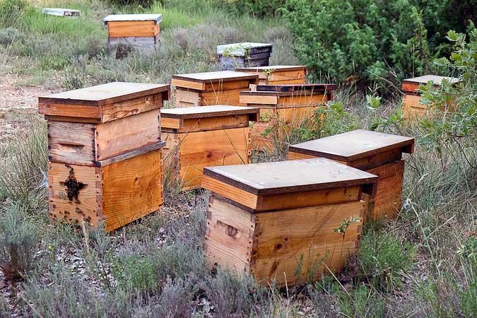 Rucher de Samuel apiculteur de Bonnechère