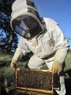 Samuel en pleine visite de ses ruches