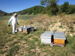 Samuel installe ses ruches en transhumance