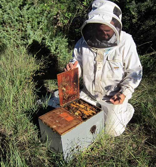 Samuel suit ses ruches en transhumance