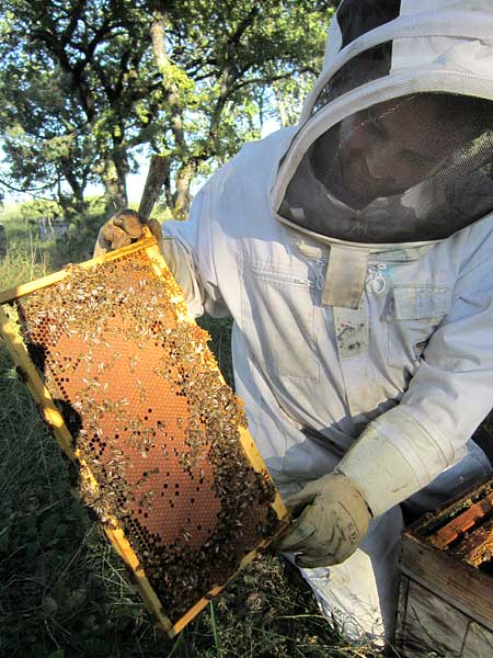 Samuel visite ses ruches en transhumance