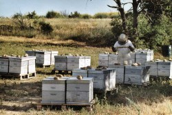 Suivi des ruches de Bonnechère en transhumance