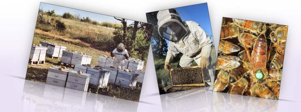 Le travail de Samuel HABERT apiculteur des ruchers de Bonnechere